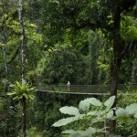 rainforest-hanging-bridge